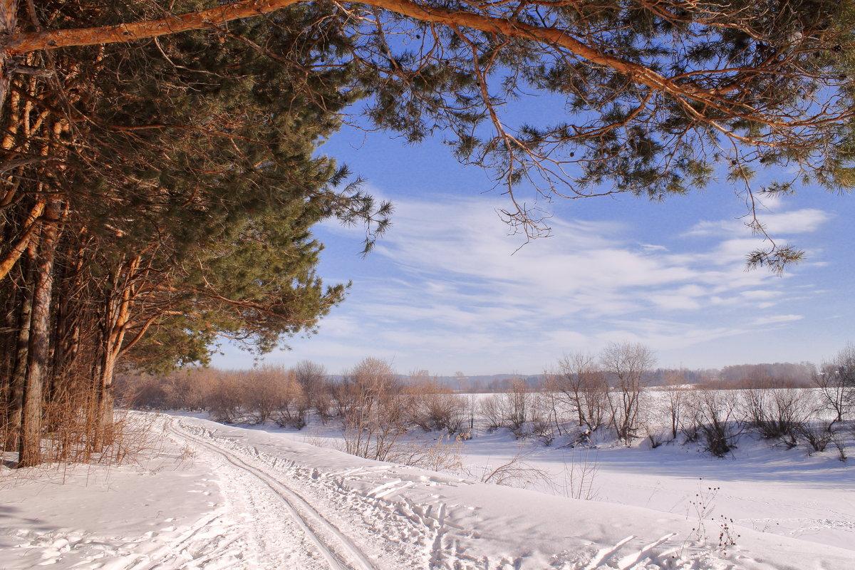Лыжня - Татьяна Шаклеина