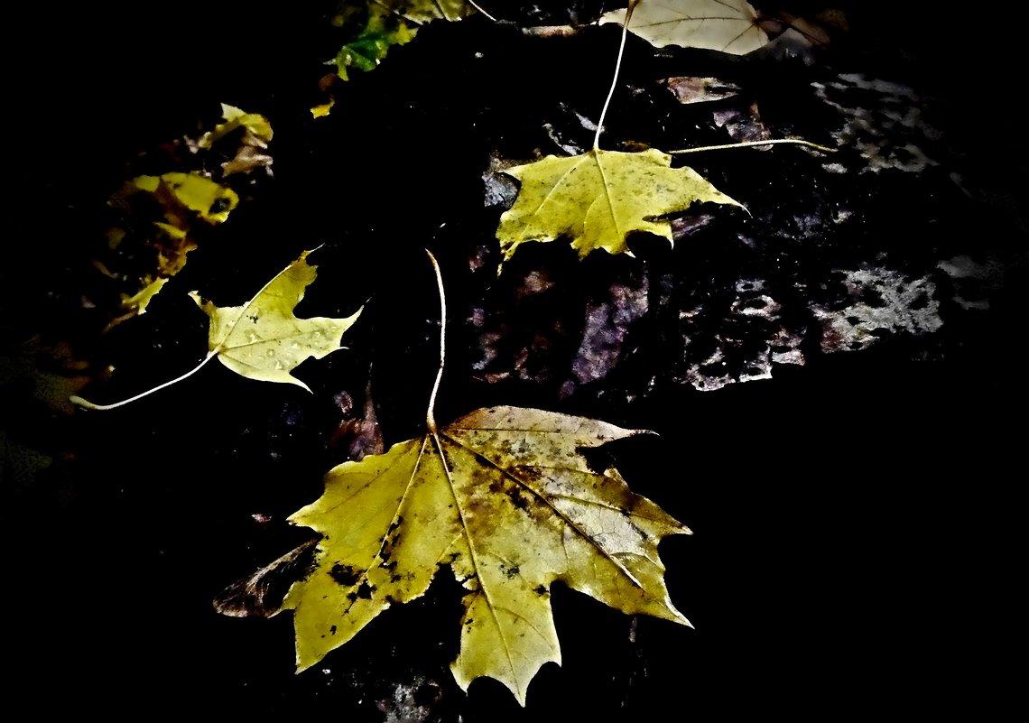 листья... - Александр Герасенков