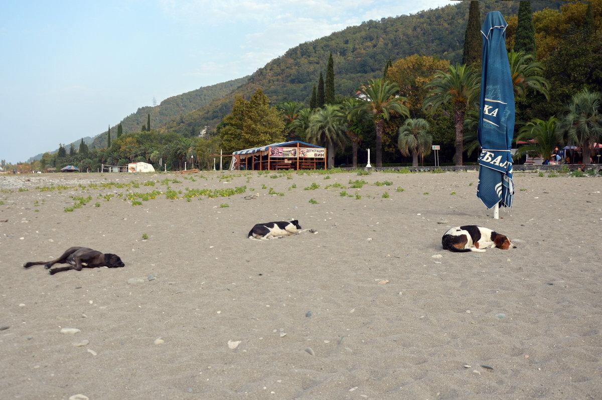 Отдыхающие на пляже ....Абхазия - Сергей К.