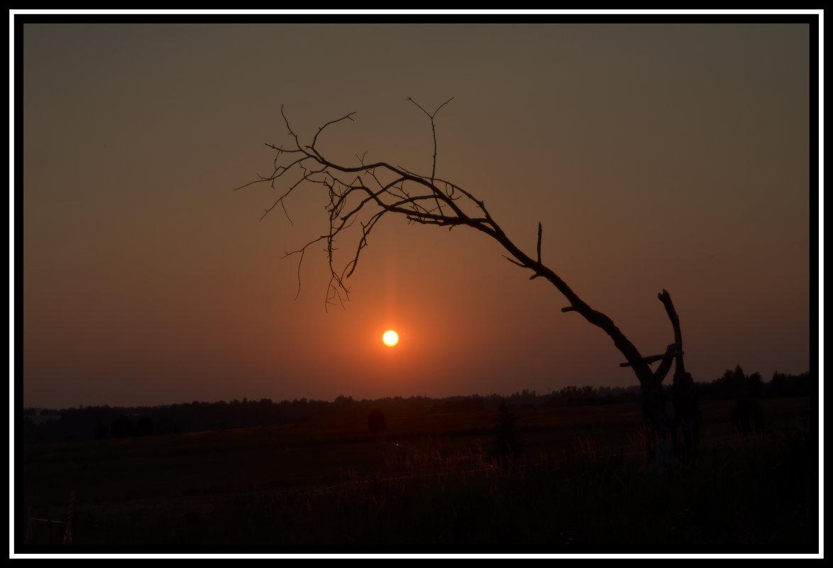 Одинокое дерево - Aleksandr Ivanov67 Иванов