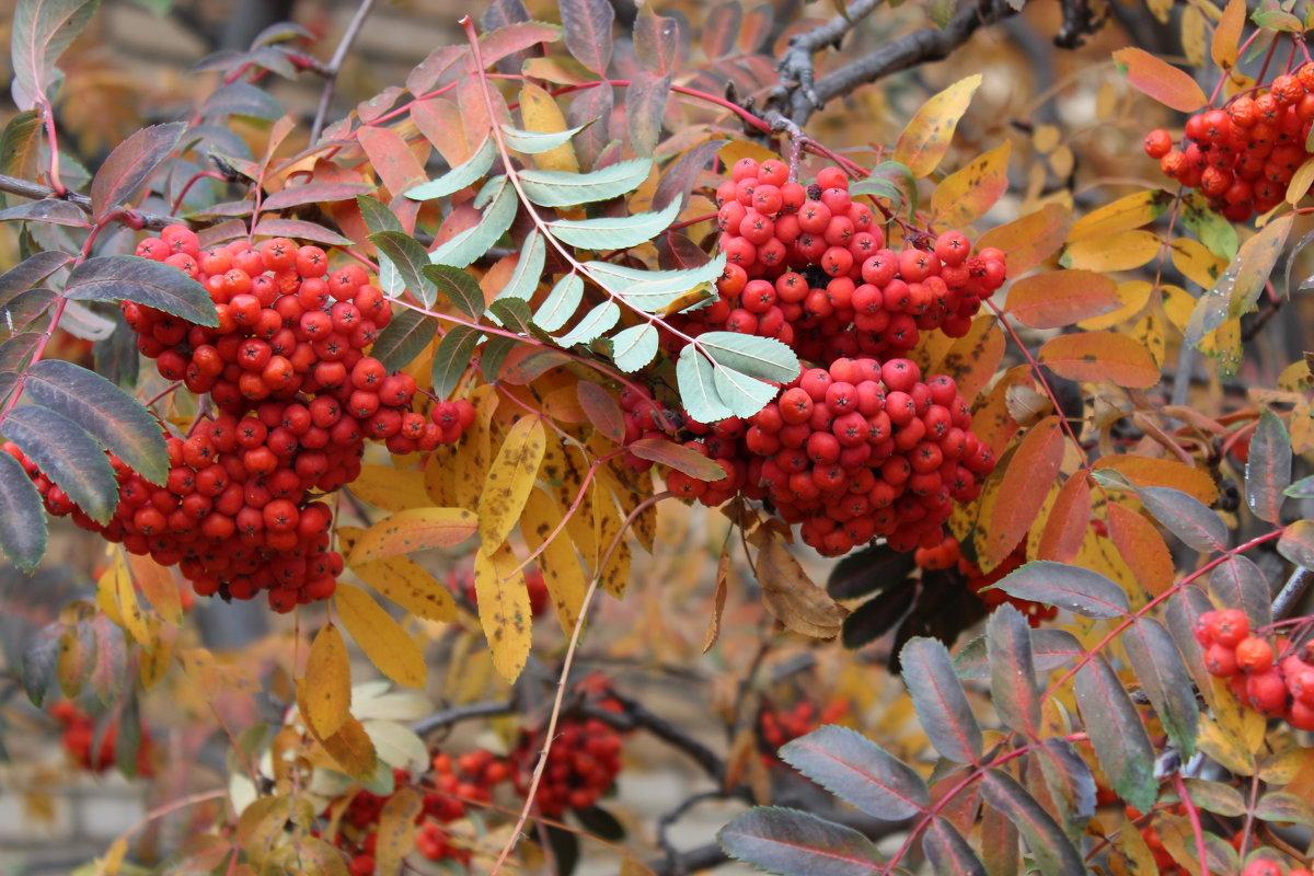 Осень разноцветная - игорь