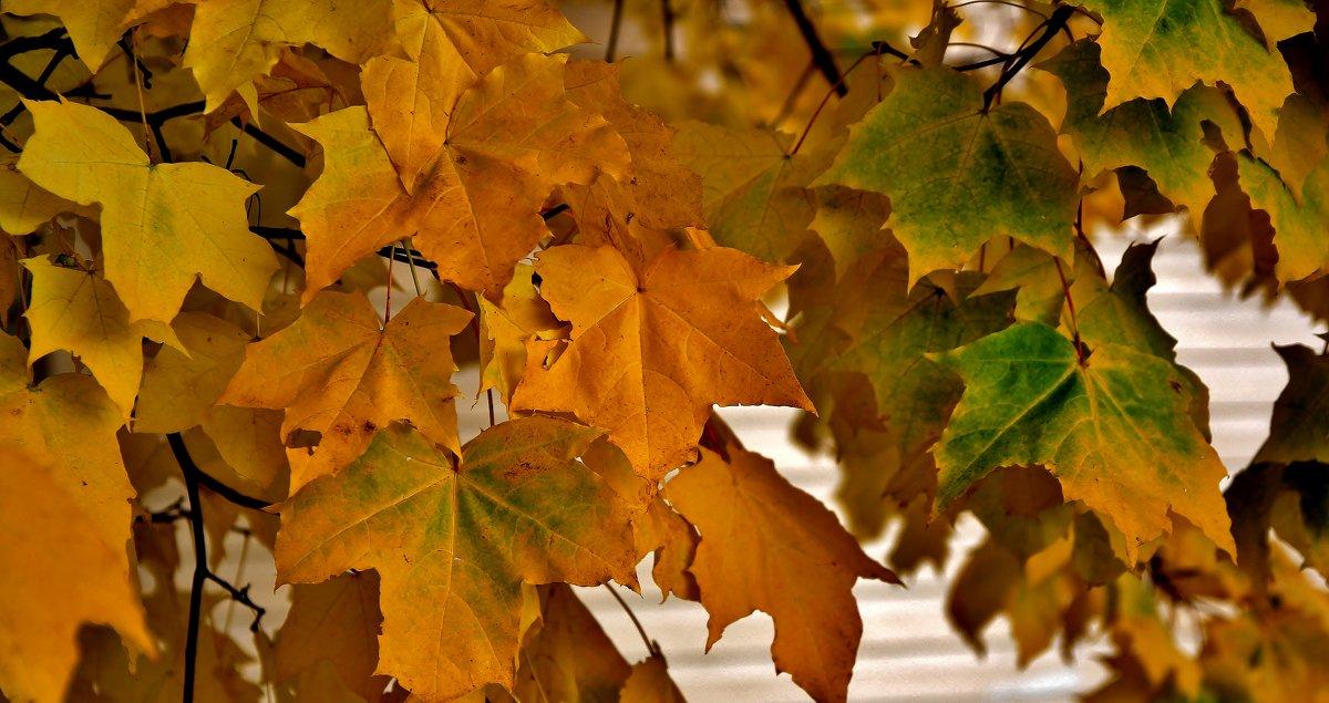 Колорит Осени... - VADIM *****