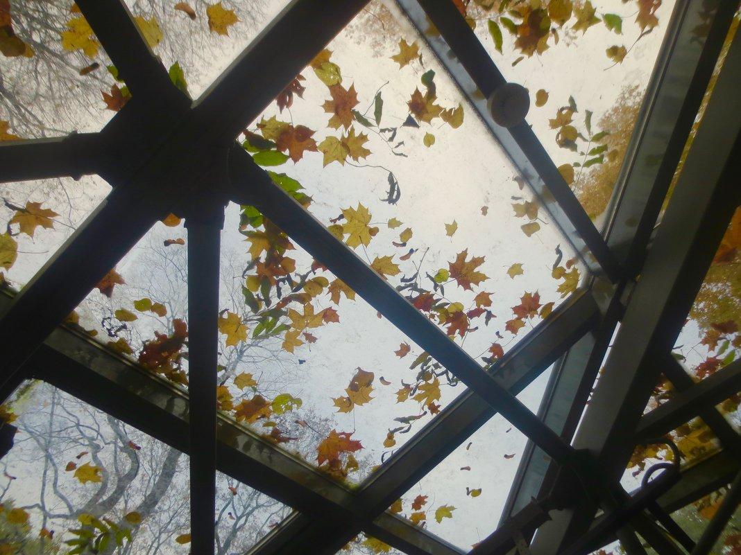 рисунки осени (на крыше оранжереи в Летнем саду) - Елена