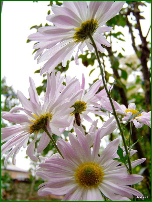 Замёрзла однако, не лето поди....Погреюсь под цветком... - Любовь К.
