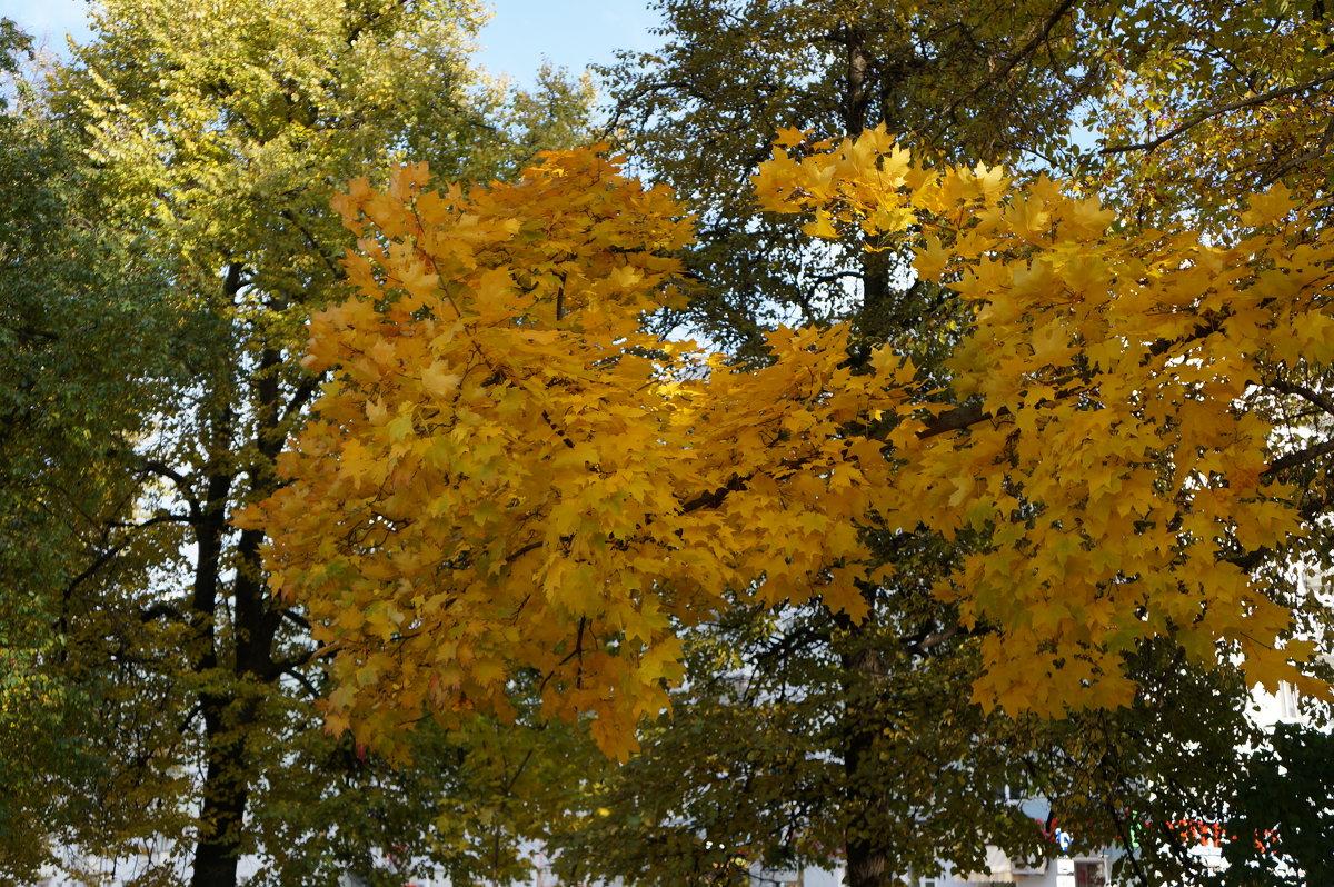Золотая осень ... - Алёна Савина