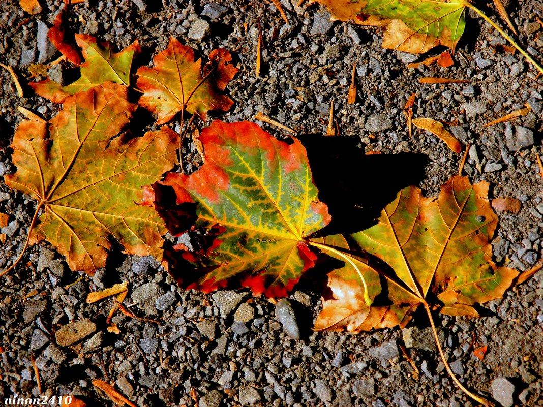 Разноцветье осени - Нина Бутко