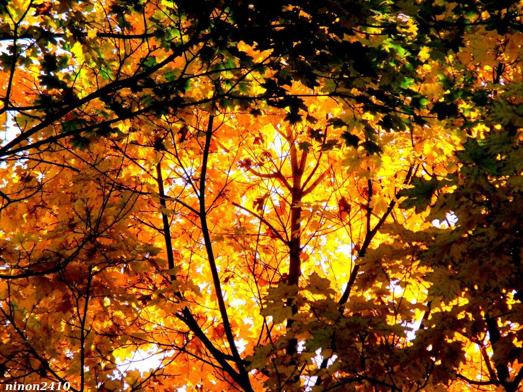 Осень выкрасила город колдовским каким-то цветом... - Нина Бутко