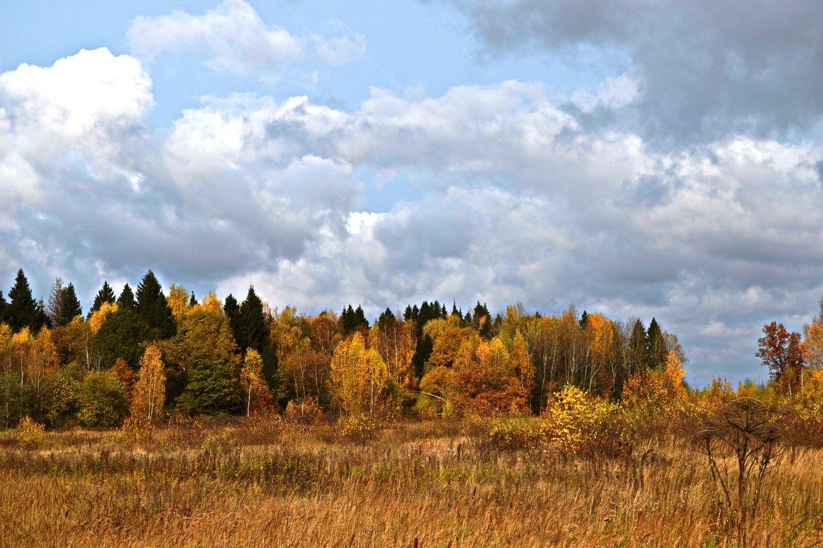 Осенний лес - Татьяна