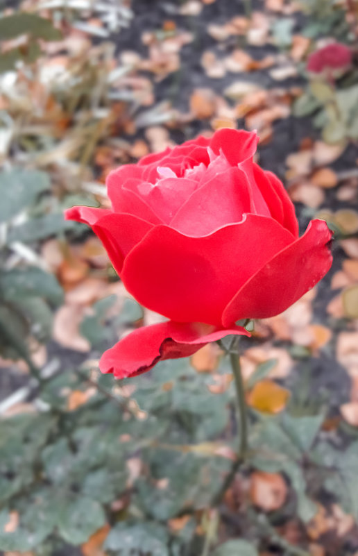 Воспоминания об ушедшем лете. 20.10.2017 - Sergey Polovnikov