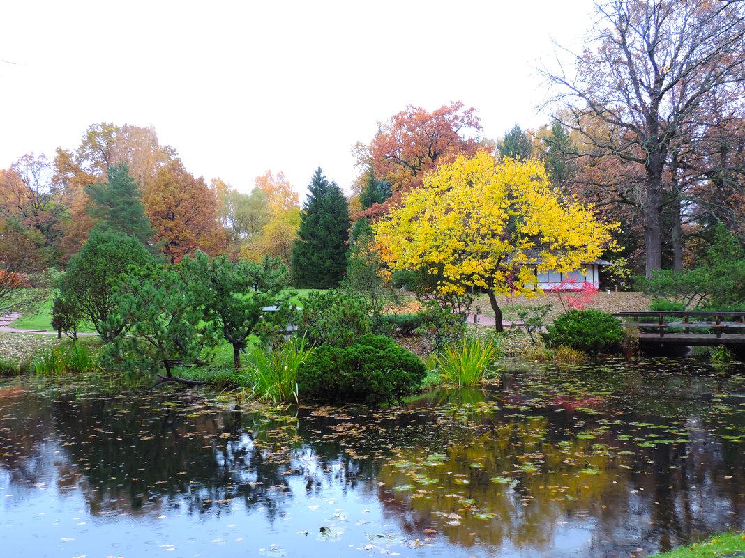 Японский сад - Елена Якушина