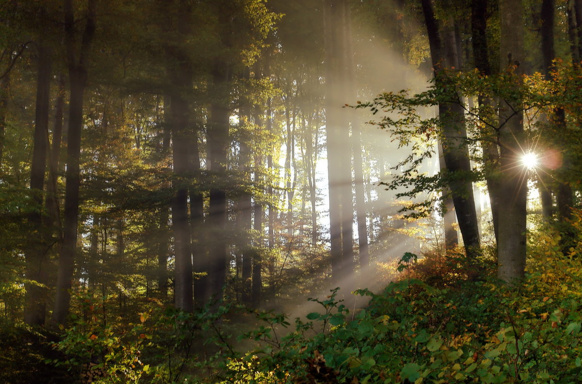лес сказочный - Elena Wymann