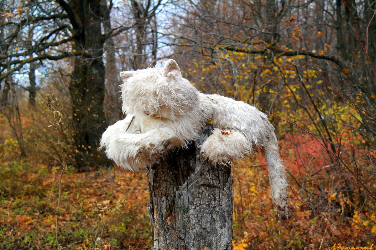 Ужасы нашего леса... - Андрей Заломленков