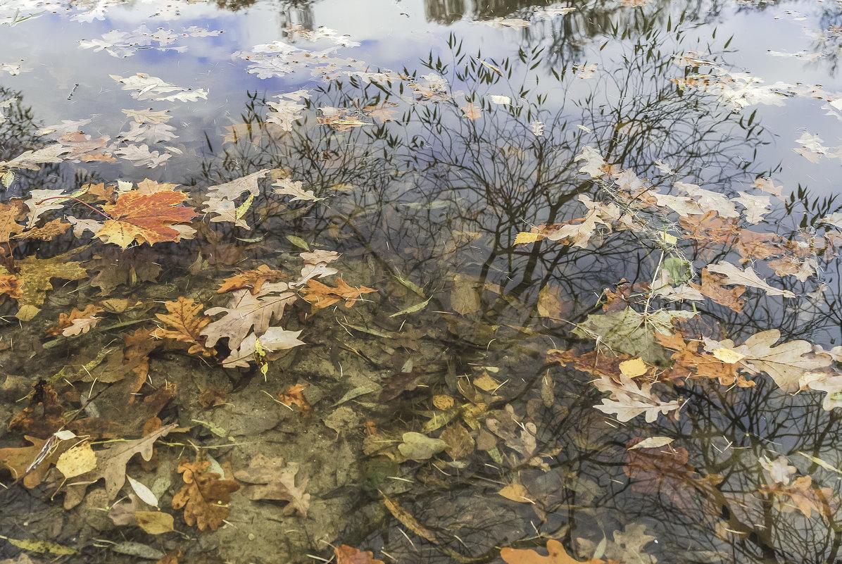 Отражение в пруду - Viacheslav Birukov