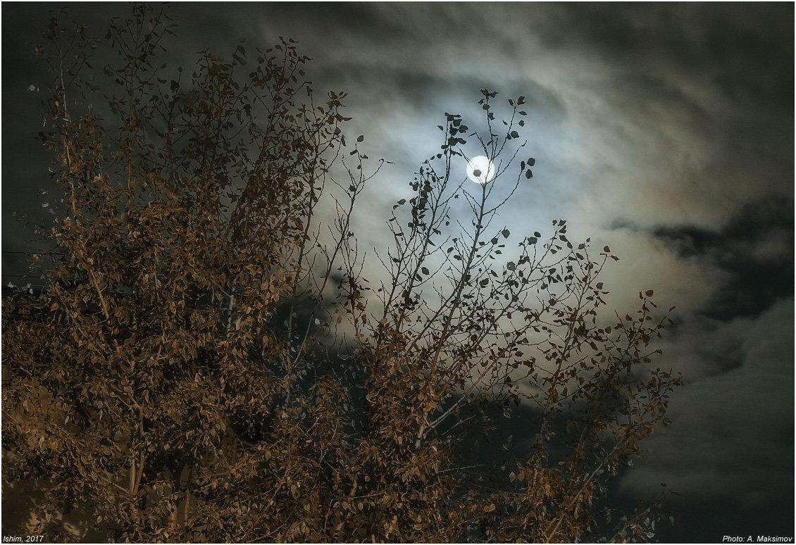 Лунная ночь - Александр Максимов