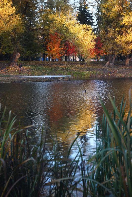 Осень в отражении - Владимир Марков