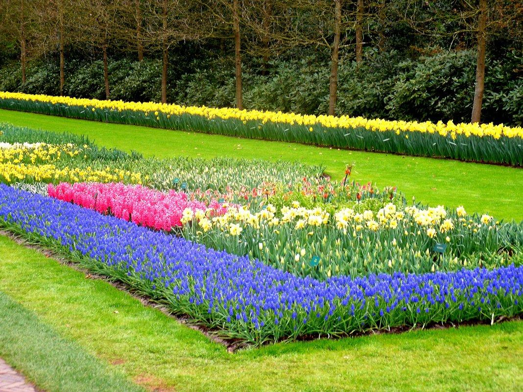 Весенний парк - svetlana.voskresenskaia