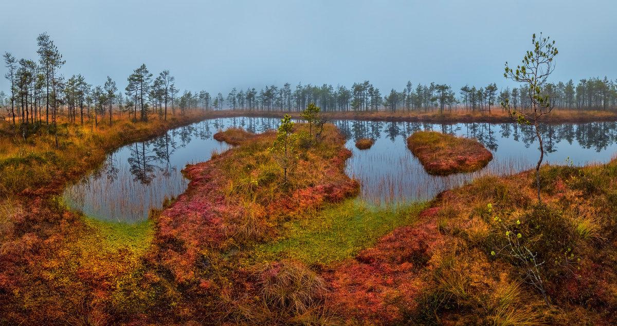 Яркие краски осеннего болота - Фёдор. Лашков
