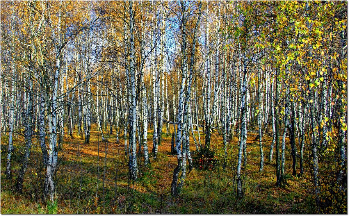Рощица - Вячеслав Минаев