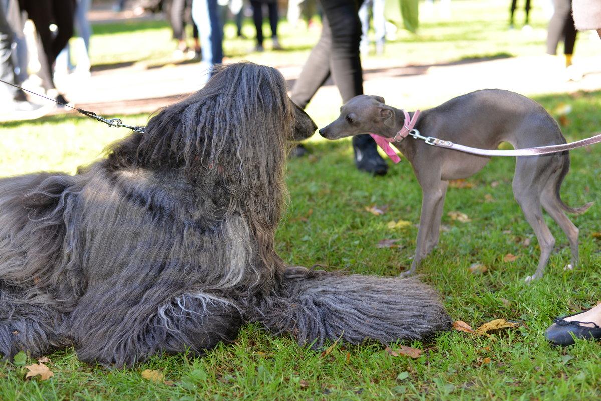 Собаки разные бывают - Caren Yvonne Rikkilä