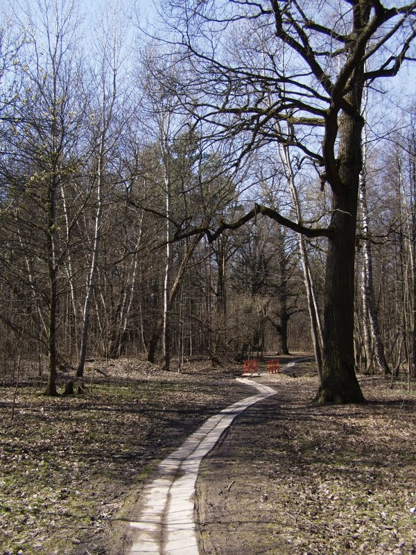 Приглашаю в весенний парк. - Анна Воробьева