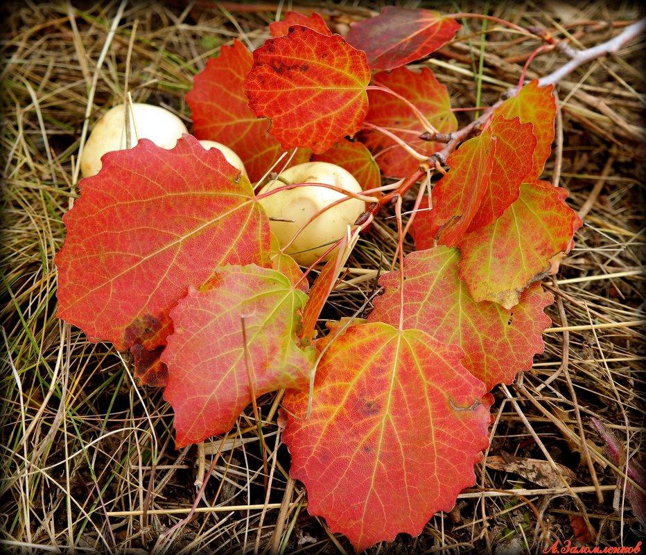 Вспоминая осень золотую.. - Андрей Заломленков