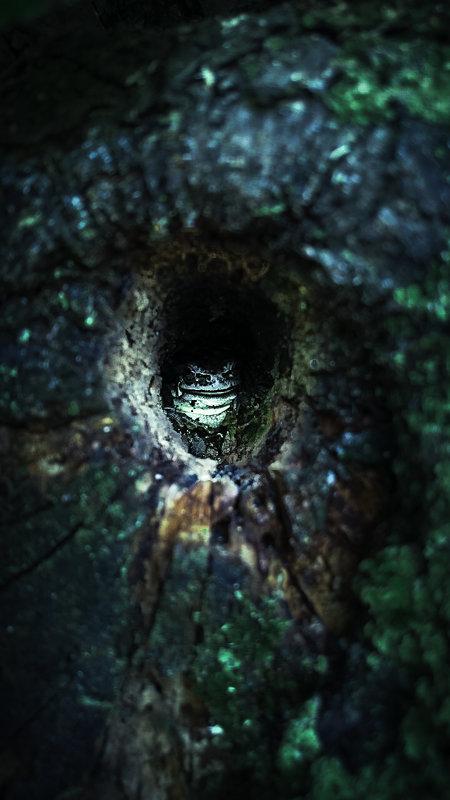 Frog - Ирина