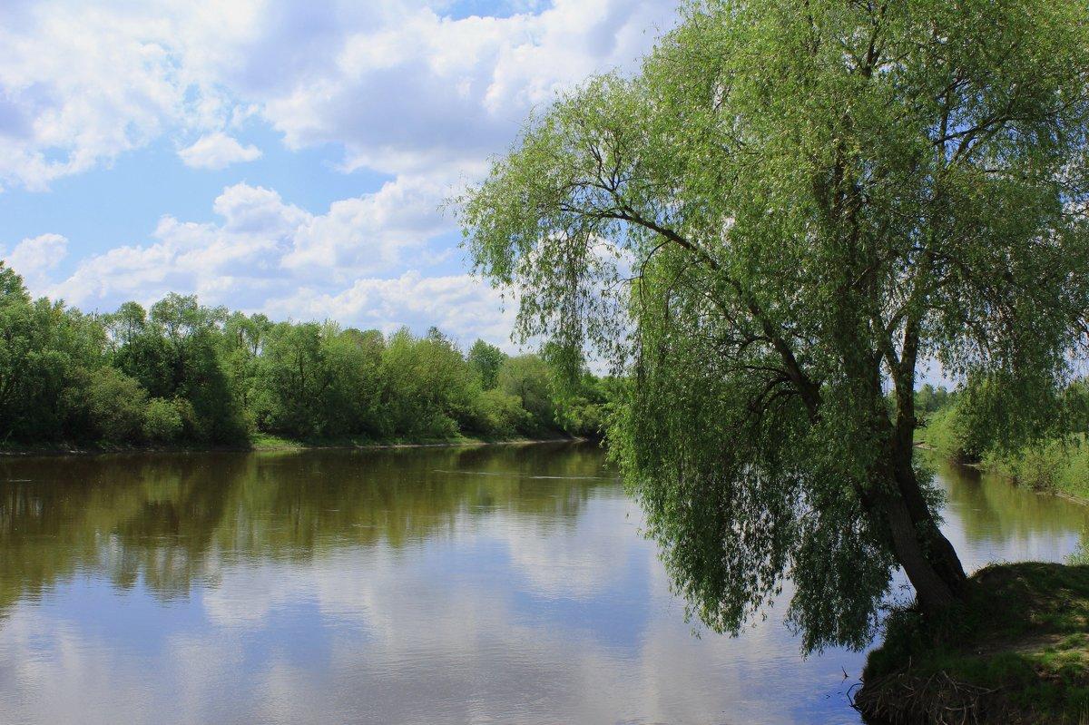 Над рекою ива - Василь Веренич
