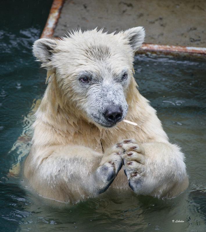 кто не любит эскимо - cfysx