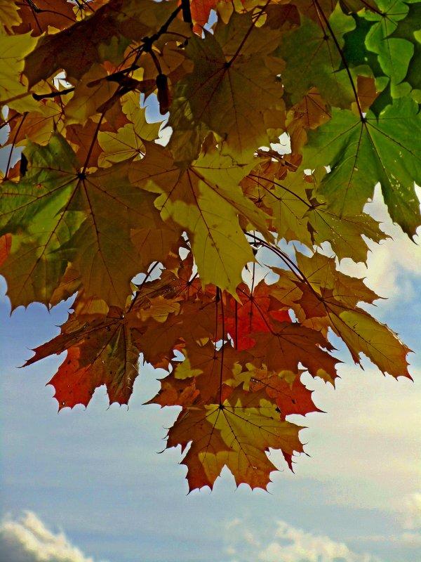 Осенний цвет - Сергей Карачин