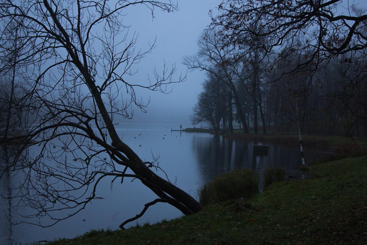 Октябрьский туман - Алёнка Шапран