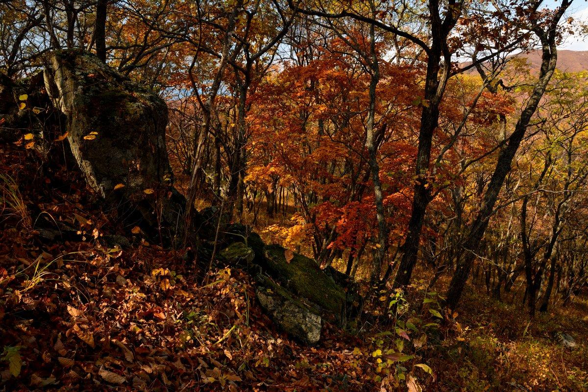 Осенний лес. - Сергей