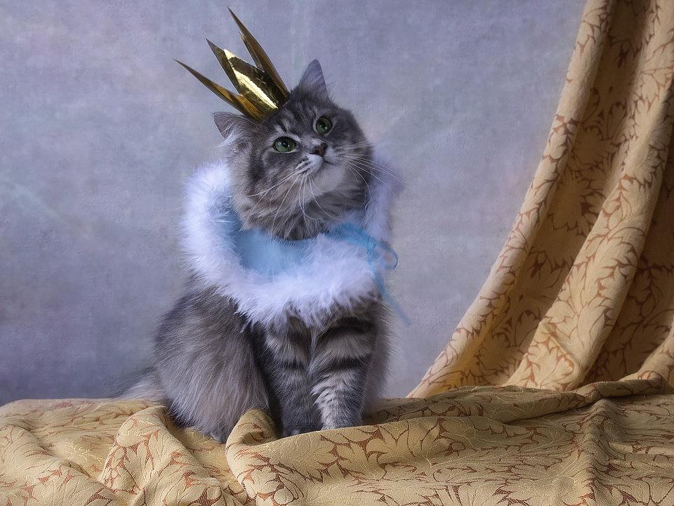 Но о том, что принцессой была, я хочу, чтобы я не забыла! - Ирина Приходько