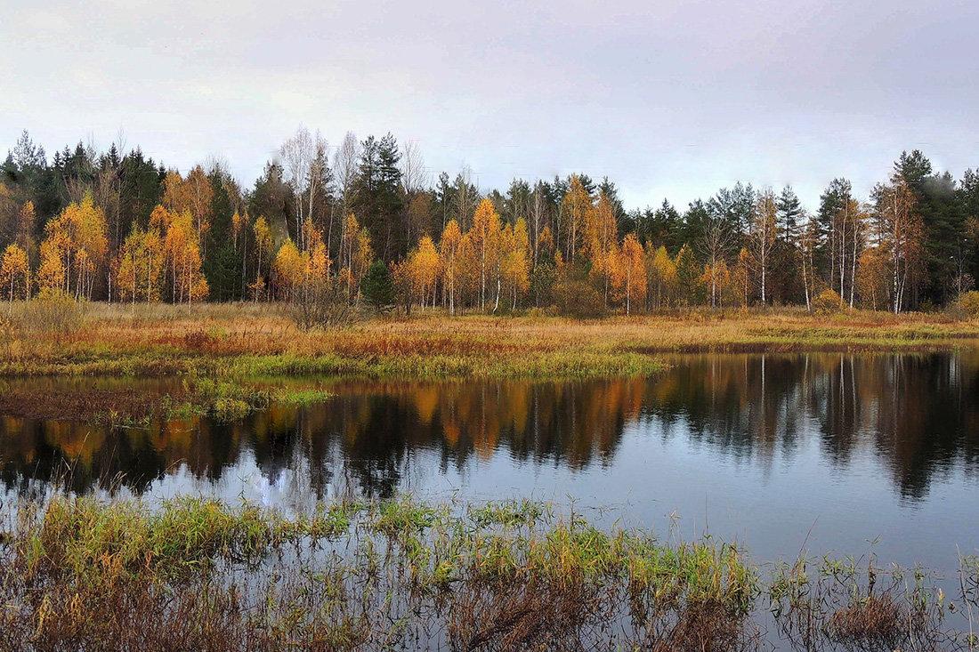 Осень отражается золотом в реке.. - Павлова Татьяна Павлова