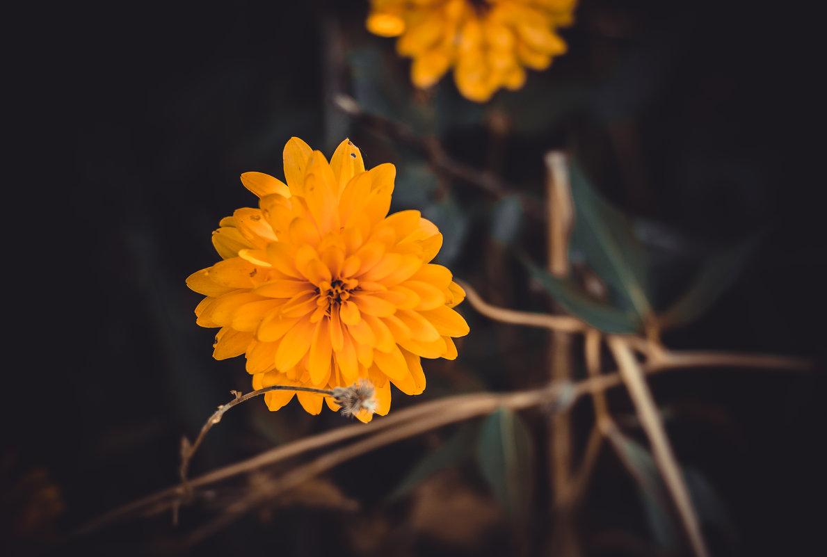 Цветы - Ольга Геращенкова
