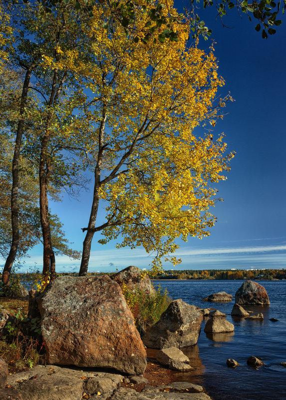 Деревья против скал - Евгений Никифоров