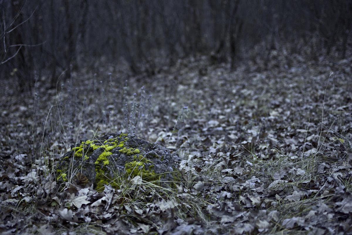 Краски поздней осени - Дмитрий