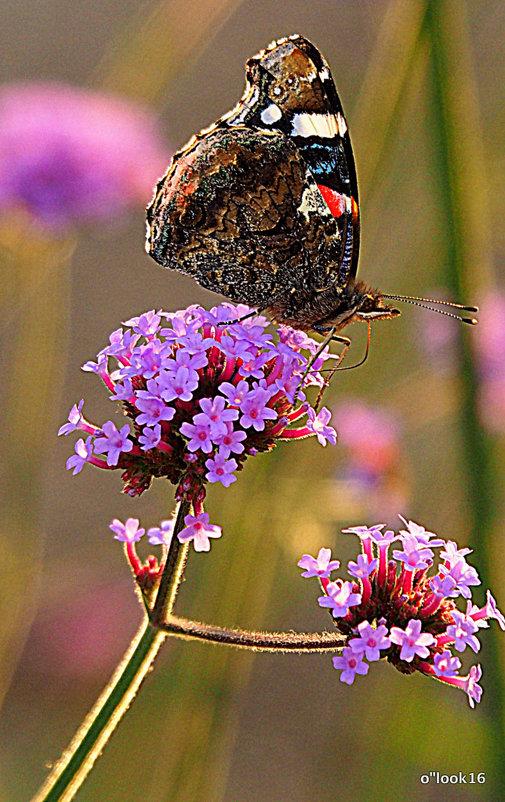 удовольствие и красота от природы - Олег Лукьянов