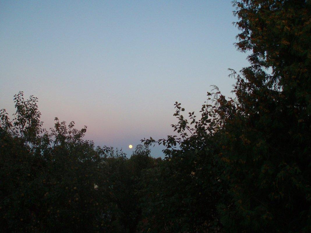 Mėnulio šviesa / Moon light - silvestras gaiziunas
