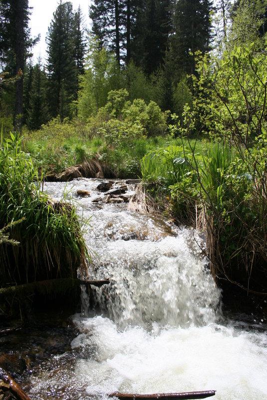 водопадик на горном ручье - vladimir polovnikov