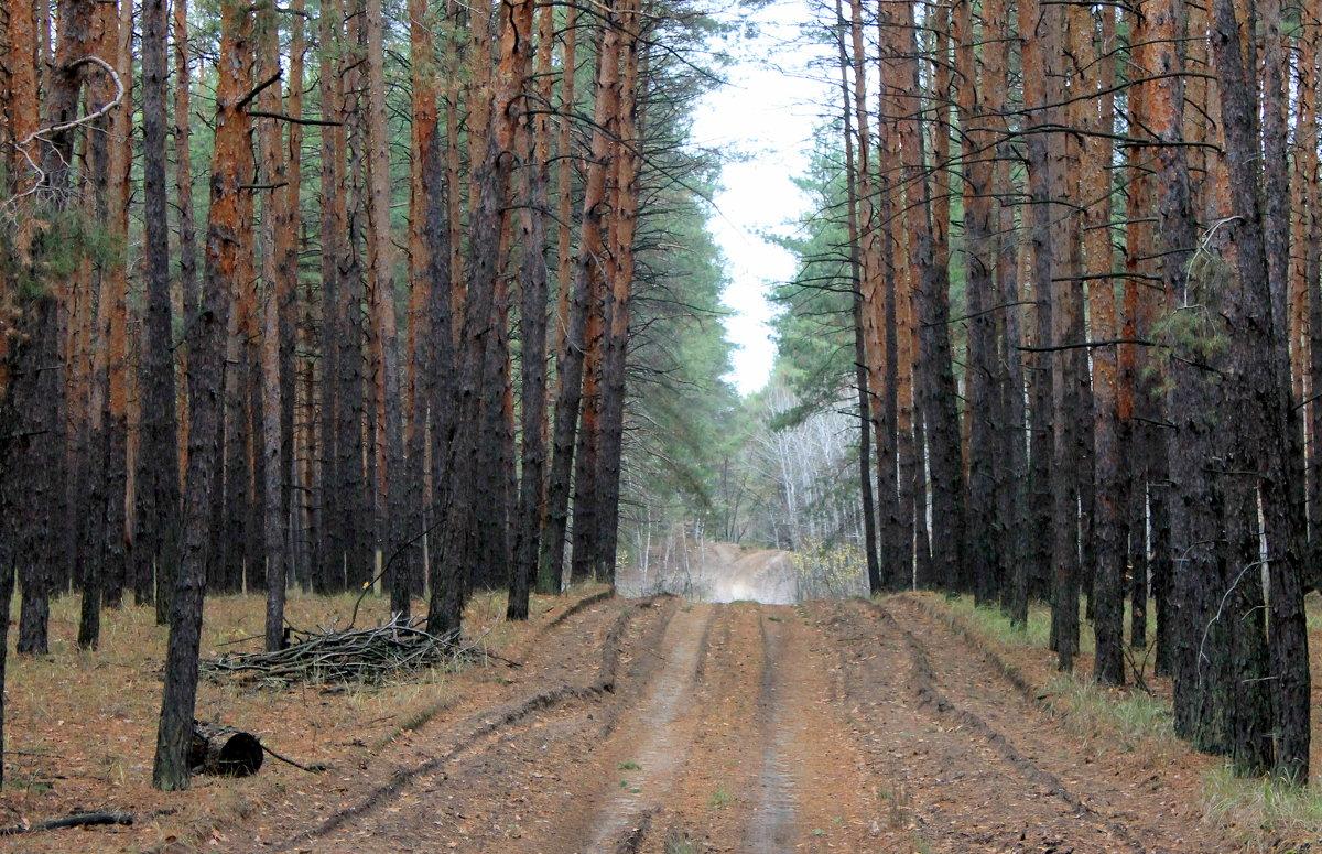 О чём шумит сосновый лес? - Валентина ツ ღ✿ღ