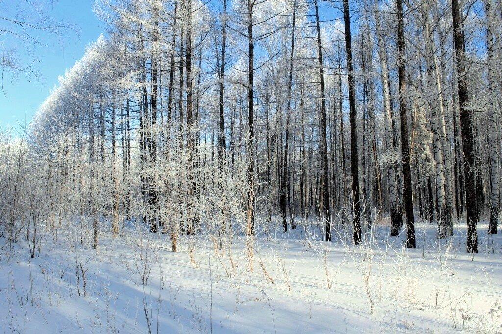 Зима - Горкун Ольга Николаевна