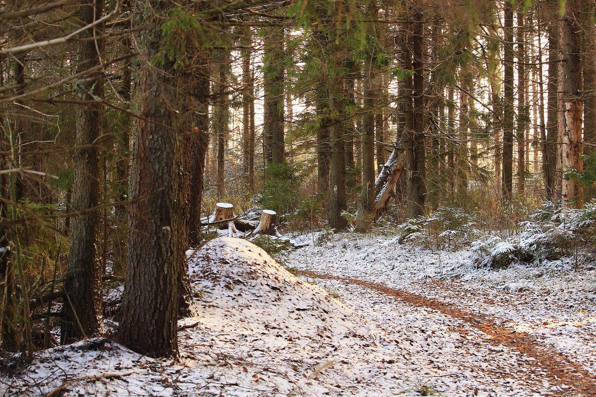 В ноябрьском лесу - Татьяна Ломтева