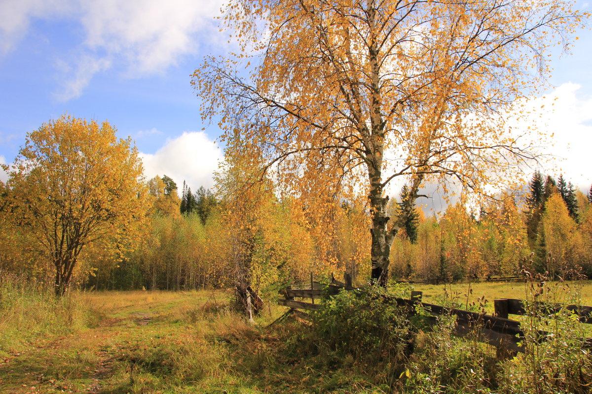 Осень в Перерве. Один из вариантов... - Александр Широнин