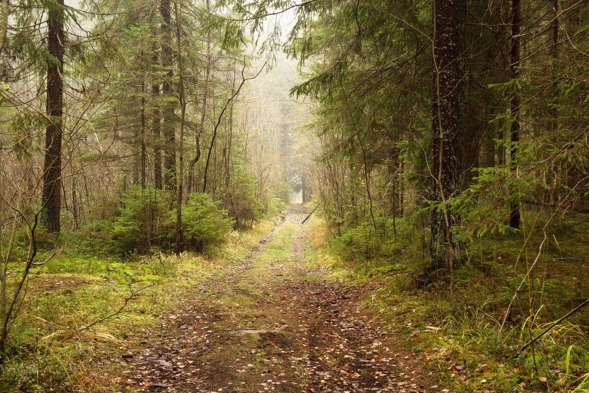 Ноябрьский лес - Aнна Зарубина