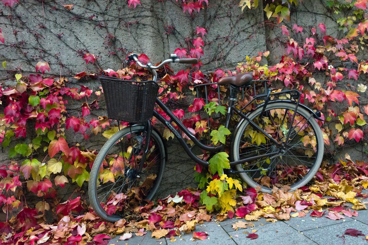 календарный лист или велосипедный портрет в октябре - Grigory Spivak