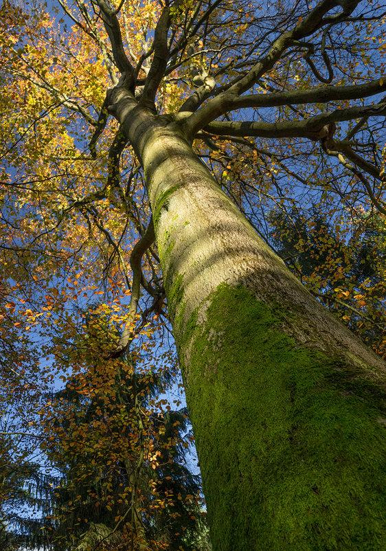 Многорукое дерево - Анна Удалова