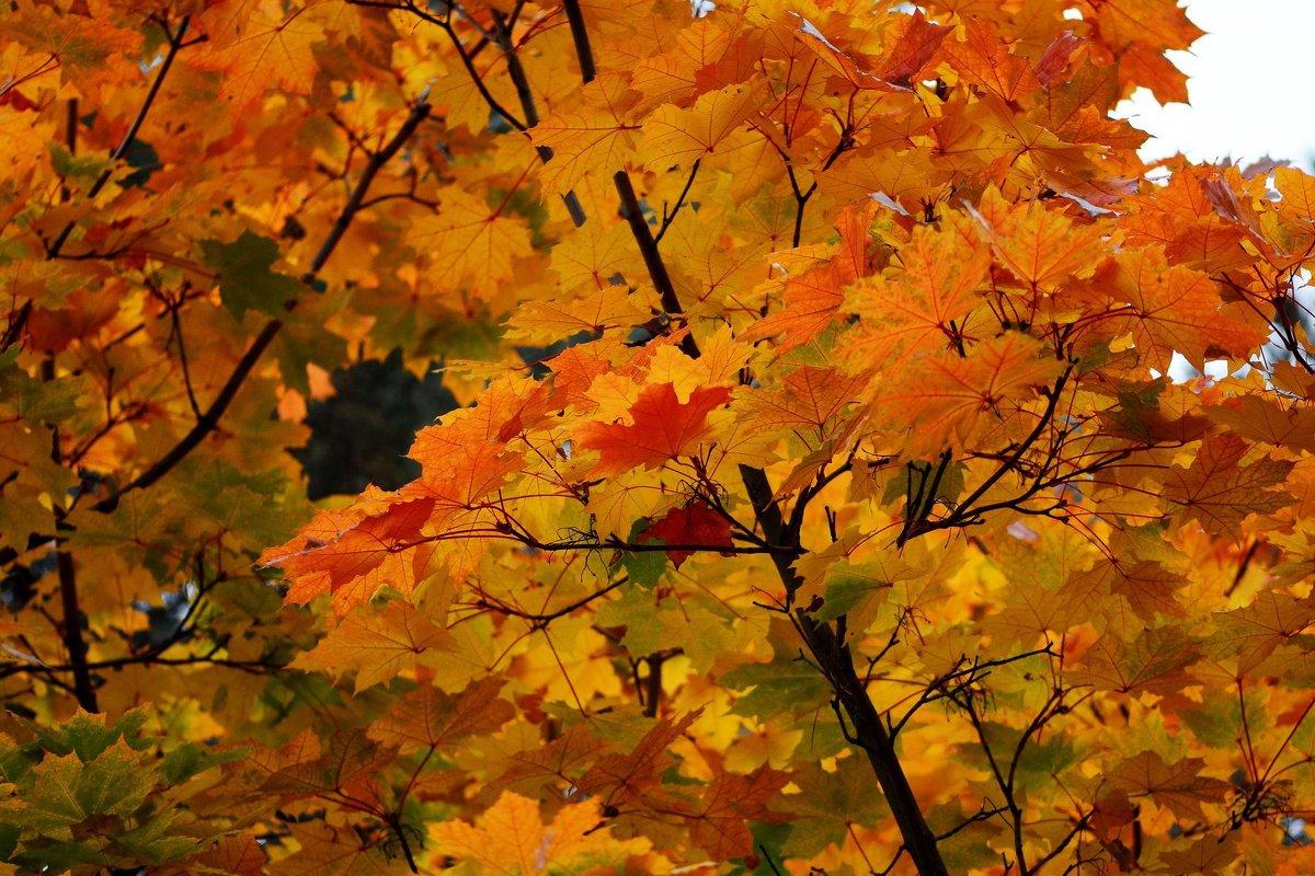 Golden autumn - Олег Шендерюк