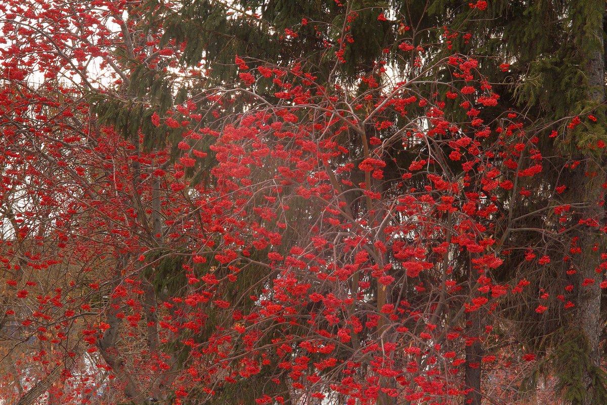 Между двух аллеек.. меж зимой и осенью - Марина Щуцких