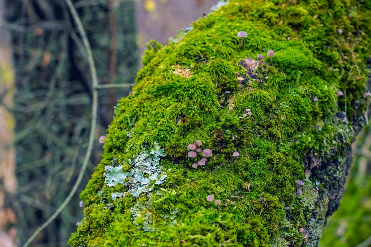 Поляна на стволе дерева - Юрий Стародубцев