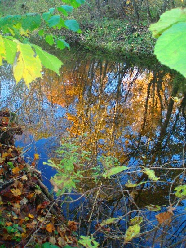 Lėvens ruduo / Autumn at river Lėvuo - silvestras gaiziunas
